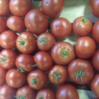Photo de tomate