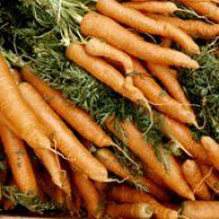 Photo de carotte